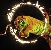 Цирки в Хомутовке