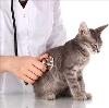Ветеринарные клиники в Хомутовке